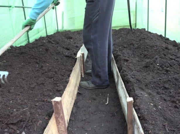 Як правильно виростити перець в теплиці