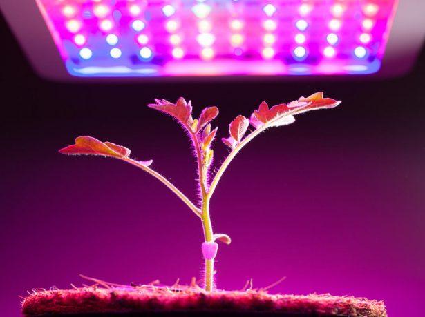 Томати за китайською технологією: велика врожайність при менших габаритах