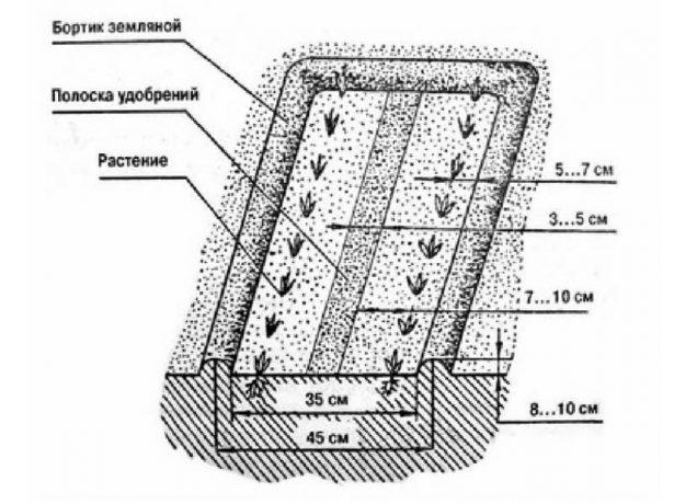 Вузькі грядки і розумні підгодівлі: город за методом джекоба міттлайдера