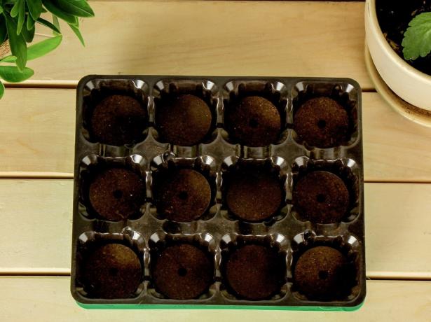 Кокосові таблетки для розсади: як їх правильно використовувати