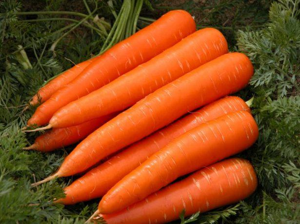 Морква королева осені-відмінний пізньостиглий сорт для тривалого зберігання