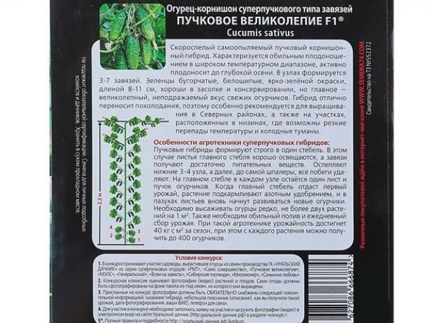 Огірки пучкова пишність f1-дорогий сорт з суперечливими відгуками
