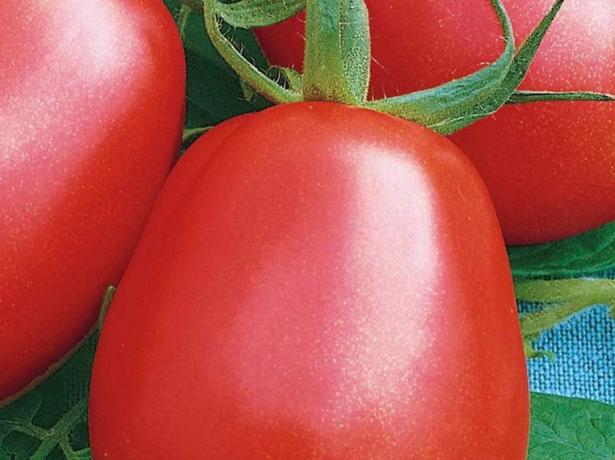 Томат ріо гранде: опис і особливості вирощування