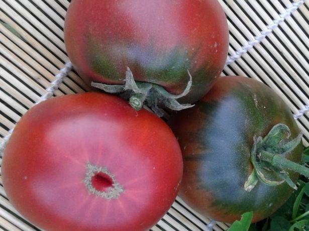 Томат циган: сорт для любителів плодів незвичайного кольору