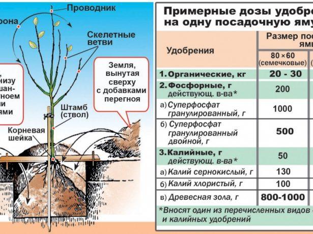 Весняні будні садівника: календар робіт на квітень–травень 2020-2021 року