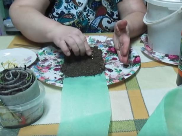 Як правильно посадити перець в равлика, плюси і мінуси цього способу