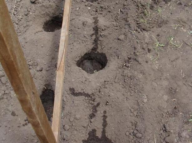 Огірки за методом білоруської тітоньки: звідки ж огірки бочками?