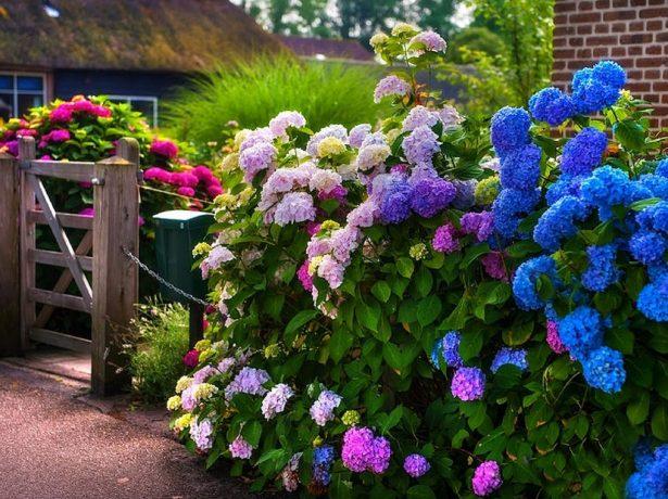 Що посадити вздовж паркану: добірка красивих і смачний рішень