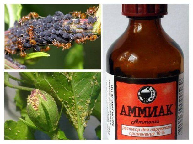 Будьте пильні: шкода соди, солі, дріжджів, нашатирю та інших народних засобів в городі