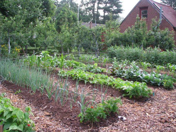 Актуальні статті в червні: встигаємо з роботами в саду-городі і радіємо врожаю