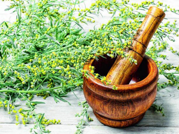 Корисні властивості полину гіркого, її використання в лікувальних і цілях і кулінарії
