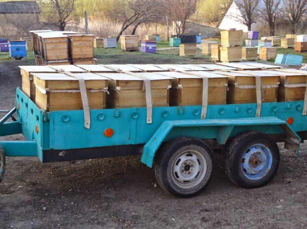 Нерівна боротьба: масова загибель бджіл в 2019 році в росії