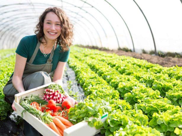 В краплі-ліки, в ложці-отрута: добрива, що підвищують кількість нітратів в урожаї