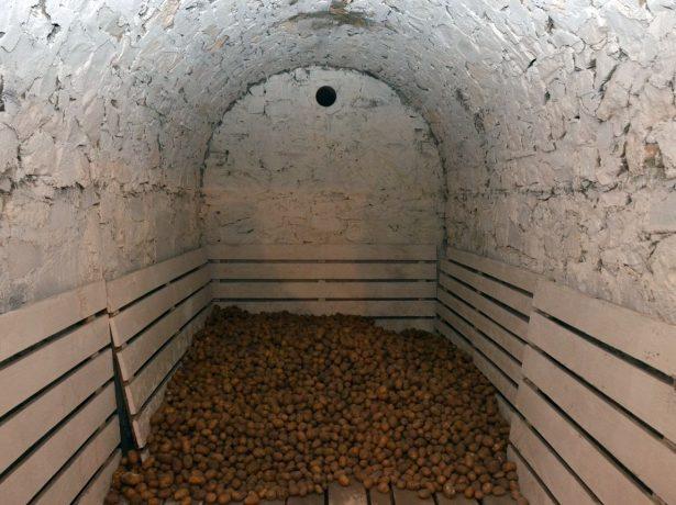 Позбавлення від цвілі в погребі, підвалі і антигрибкова обробка деревини