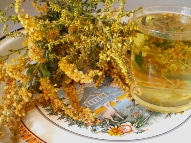 Желтоцвет в зеленій аптеці: корисні властивості золотарника