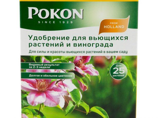 Пінк фентезі-крупноквітковий рожевий клематис