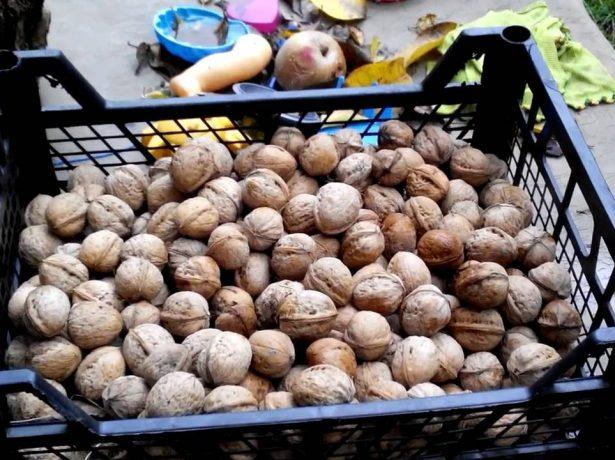 Зберігаємо волоські горіхи правильно: як уберегти цінний продукт від псування