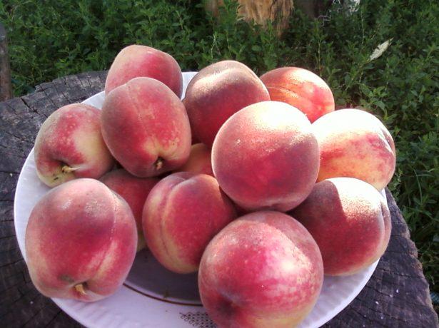 Загадковий сорт персика воронезький кущовий: що про нього говорять