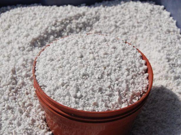 Гладіолуси: як зберегти цибулини взимку