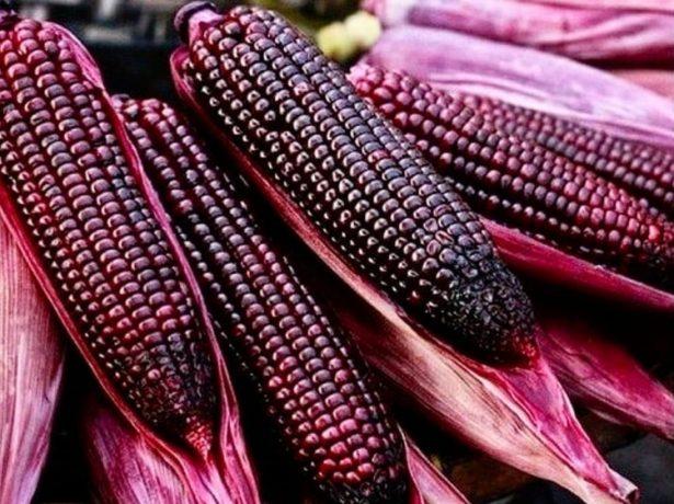 Вода при варінні кукурудзи стала червоною: чи варто переживати або можна сміливо їсти такий продукт