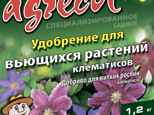 Клематис президент: яскравий морозостійкий сорт з великими квітками