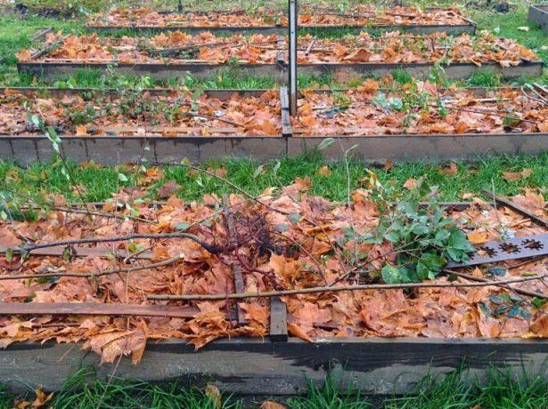 Підготовка саду та городу до зими після збору врожаю: необхідні осінні роботи і терміни їх проведення
