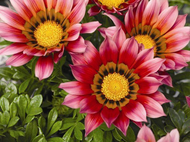 Осінні квіти в саду: культури, квітучі у вересні, жовтні, листопаді і навіть при заморозках