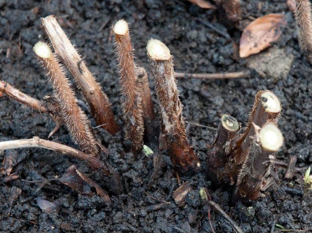 Обробка саду восени від шкідників і хвороб: як, коли і чим