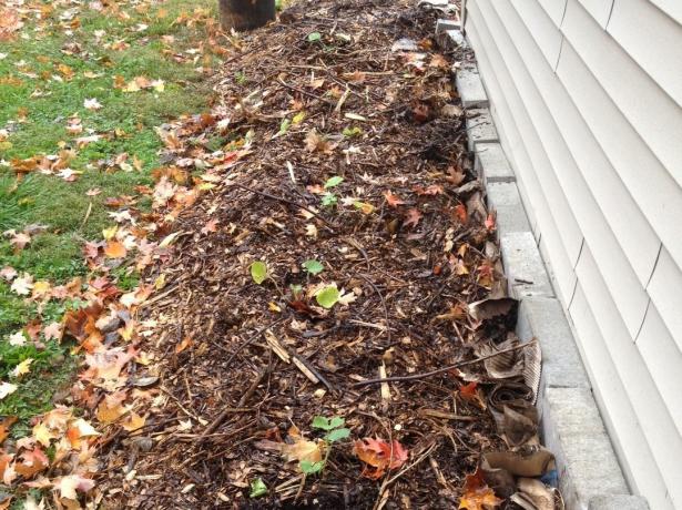Догляд за флоксами восени