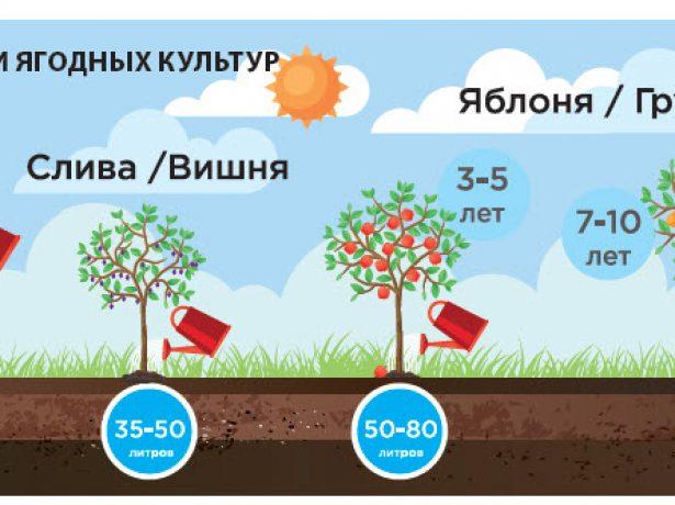 Підзимовий полив саду: коли і як провести його правильно