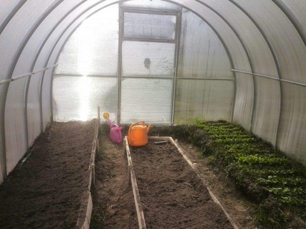 Обробка теплиці восени: гід городнику