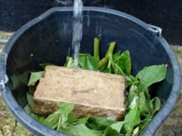 Все про зелене добриво: його властивості і технологія приготування
