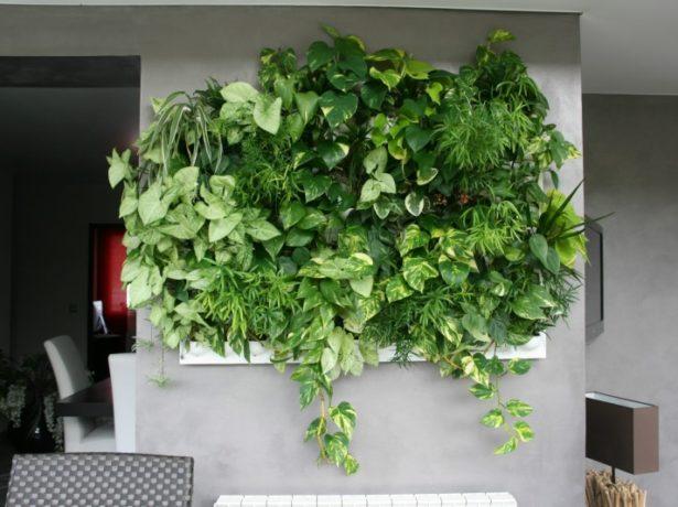 Сингоніум: як виростити вдома елегантну ліану з тропічного лісу