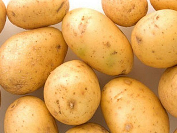 Картопля сорту рівєра: опис від посадки до врожаю