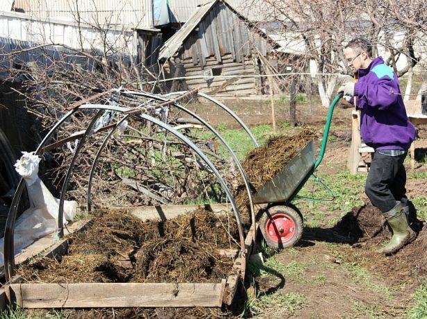Особливості вирощування різних сортів огірків в сибіру