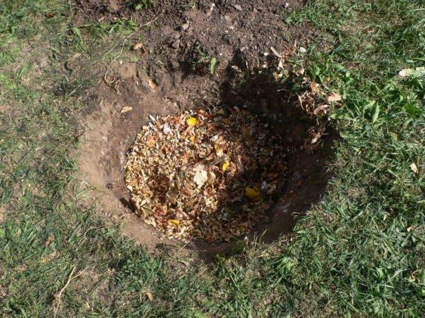 Черешня ревна: вирощуємо урожайний сорт у себе в саду