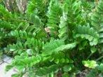 Заміокулькас: що потрібно знати дбайливому господареві доларового дерева